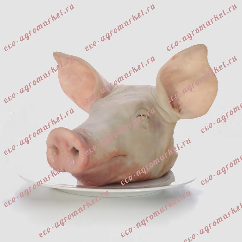 Голова с языком свиная 400р